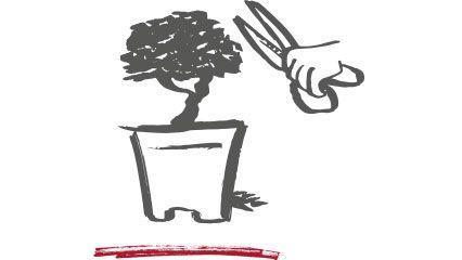 Comment donner la forme aux bonsaï ?