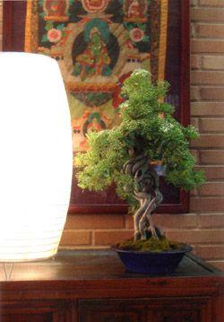 Bonsái con iluminación artificial