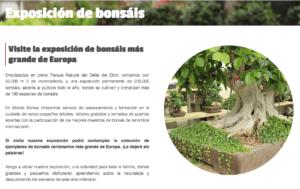 exposicion de bonsais Mistral Bonsai