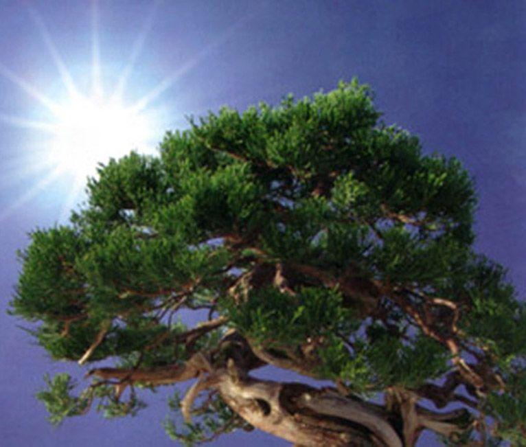 La iluminación en bonsái
