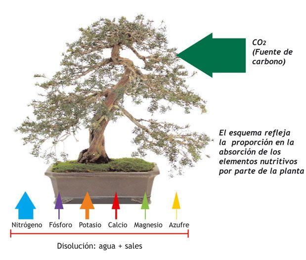 La importancia del abonado en el bonsái