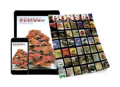 revista digital Bonsai Pasión