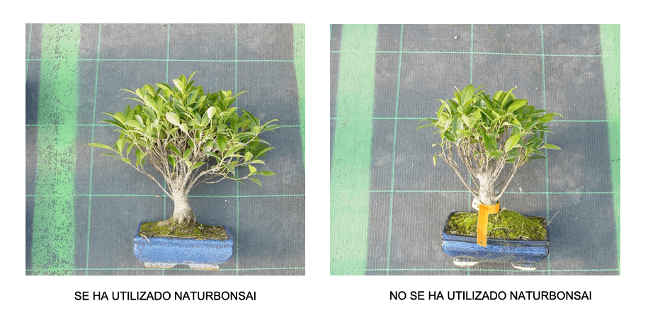 uso naturbonsai