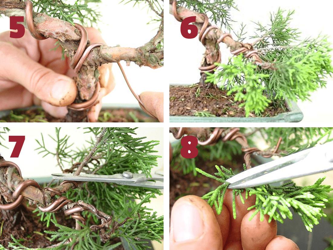 remodelacion juniperus 2