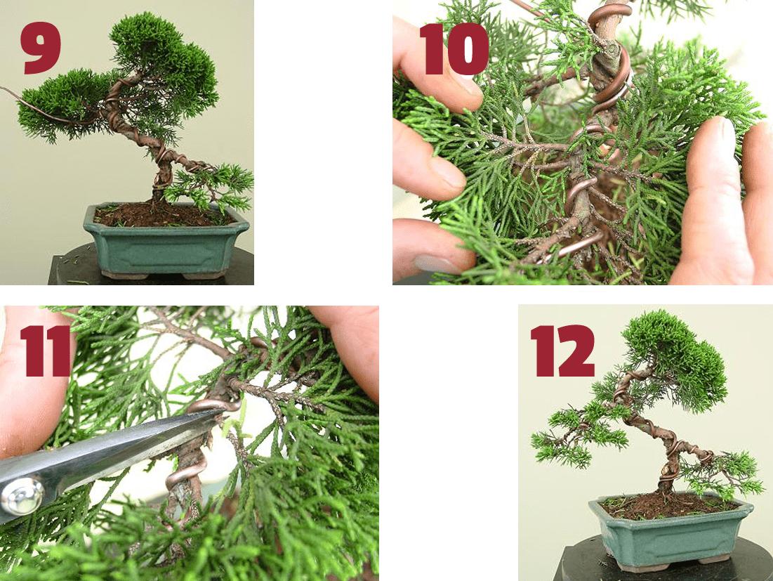 remodelacion juniperus 3