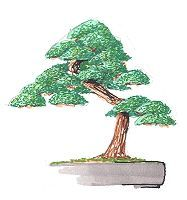 dibujo juniperus ideal
