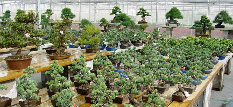 Bonsai paradise in the Ebro Delta