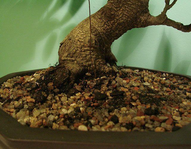 quand mettre de l engrais #15: jardin bio - quels fumiers épandre
