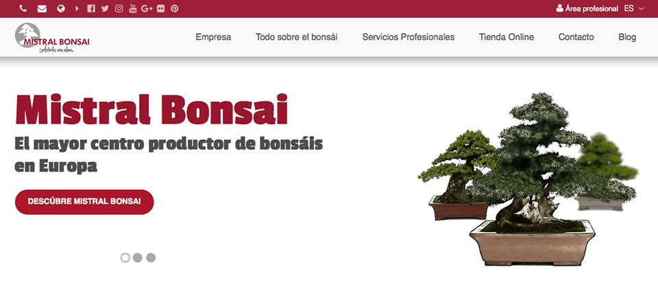 Mistral Bonsai launches its new responsive website