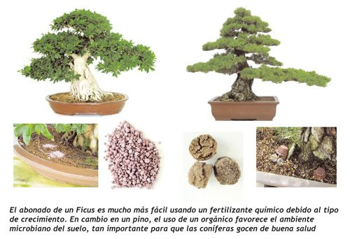 engrais organique bonsaï