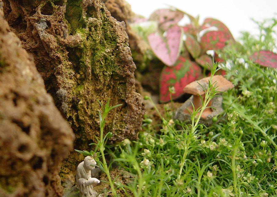 Feng-Lui, un paisaje en miniatura