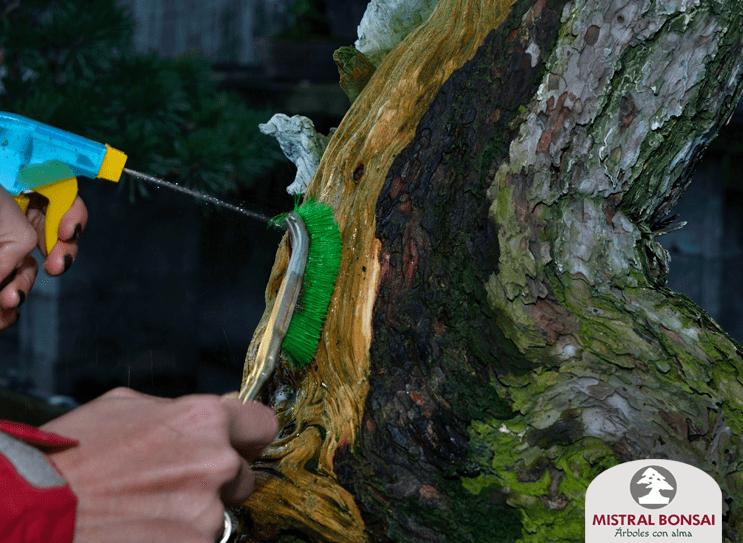 cepillado madera pinus