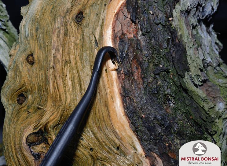 repaso bordes madera pinus