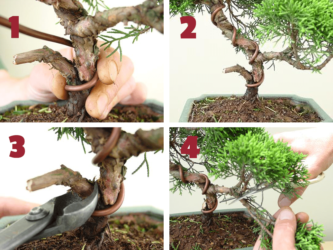 remodelation juniperus 1