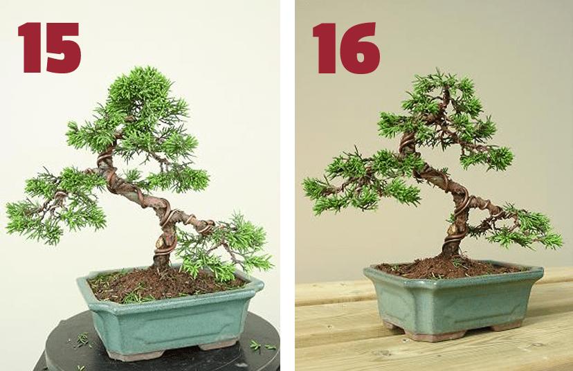 resultado final remodelacion juniperus