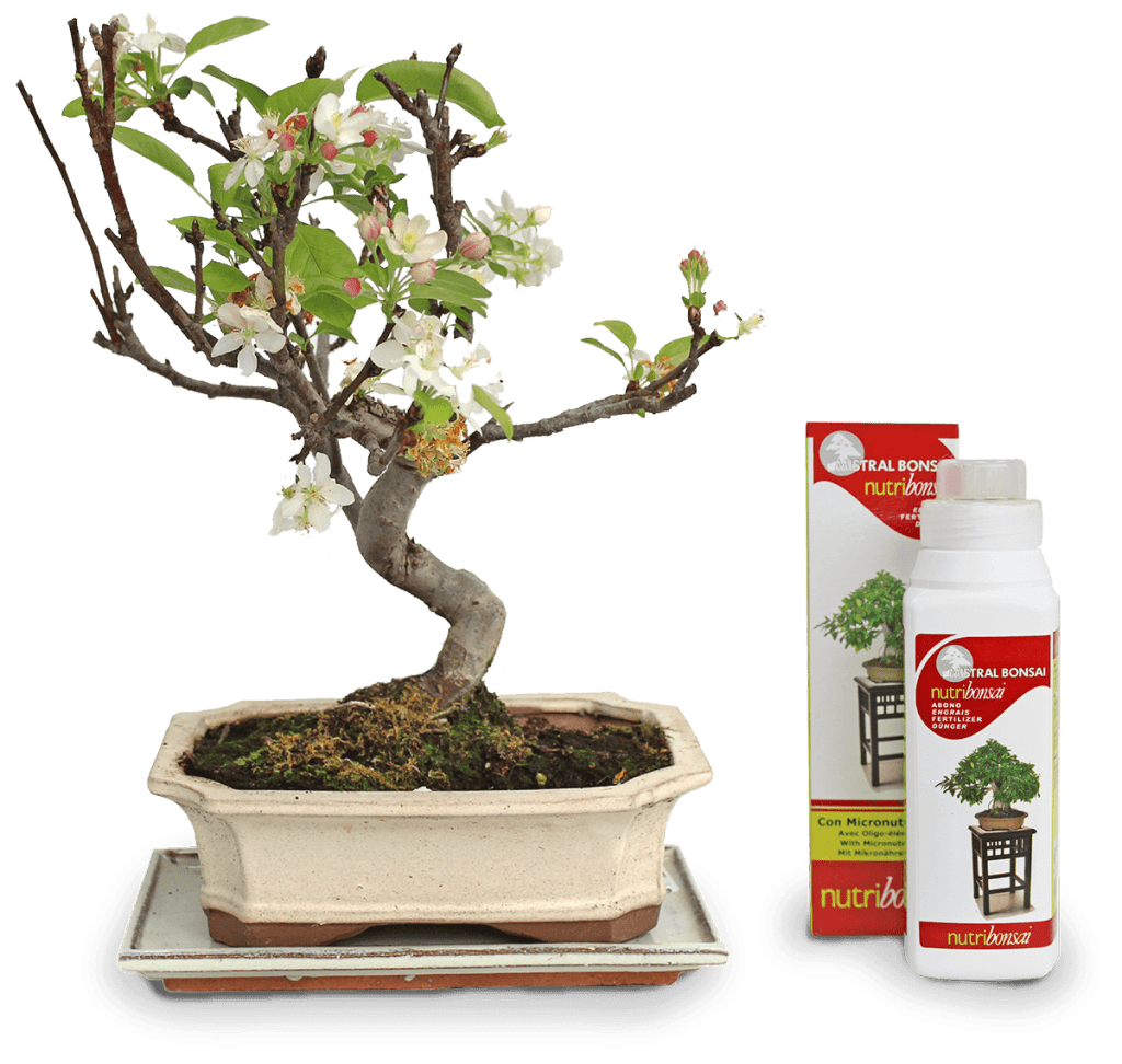Fertiliser for Malus bonsai