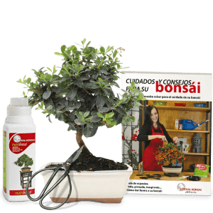 bonsaiabonotijerasguia