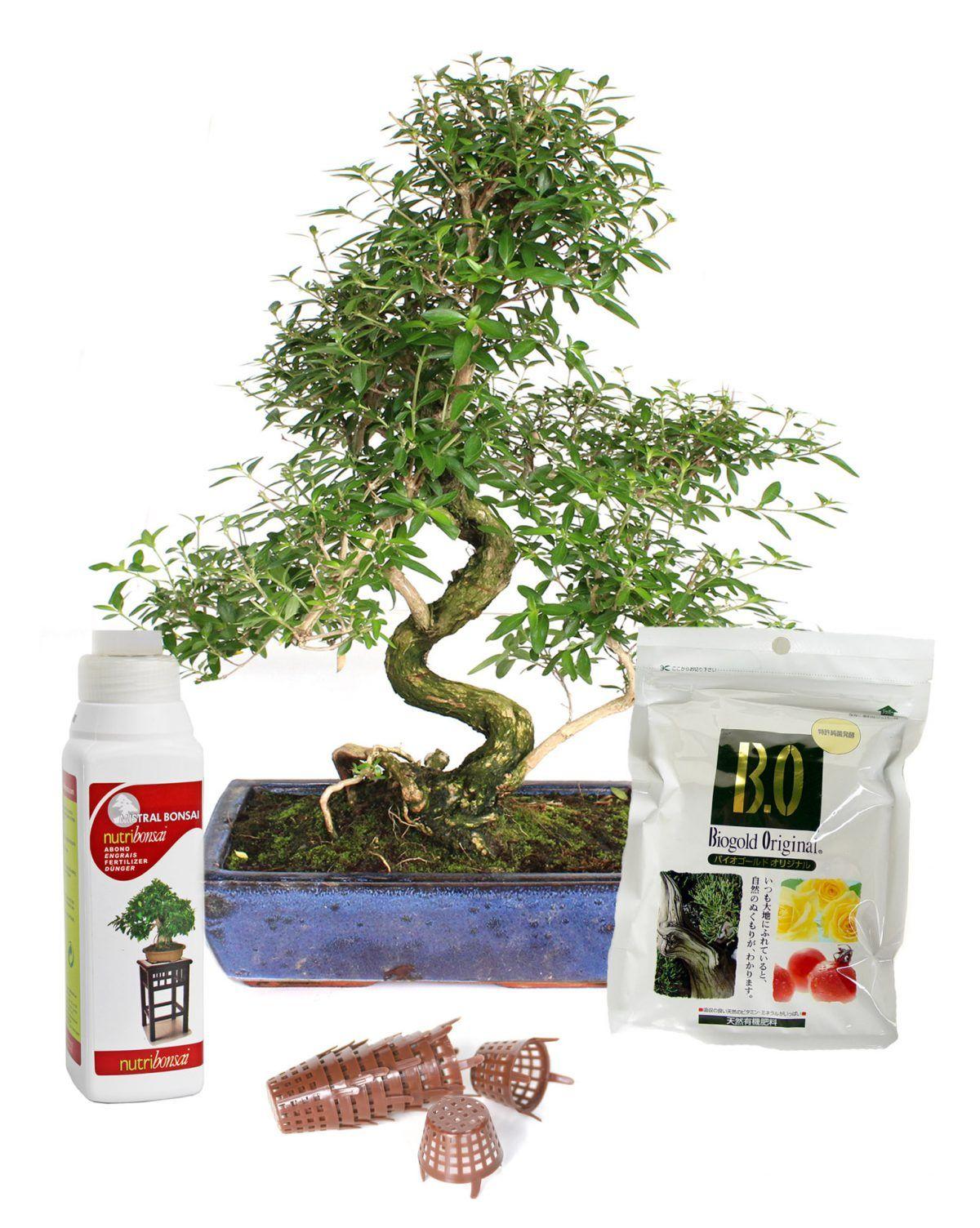 Calendario de abonado del bonsái