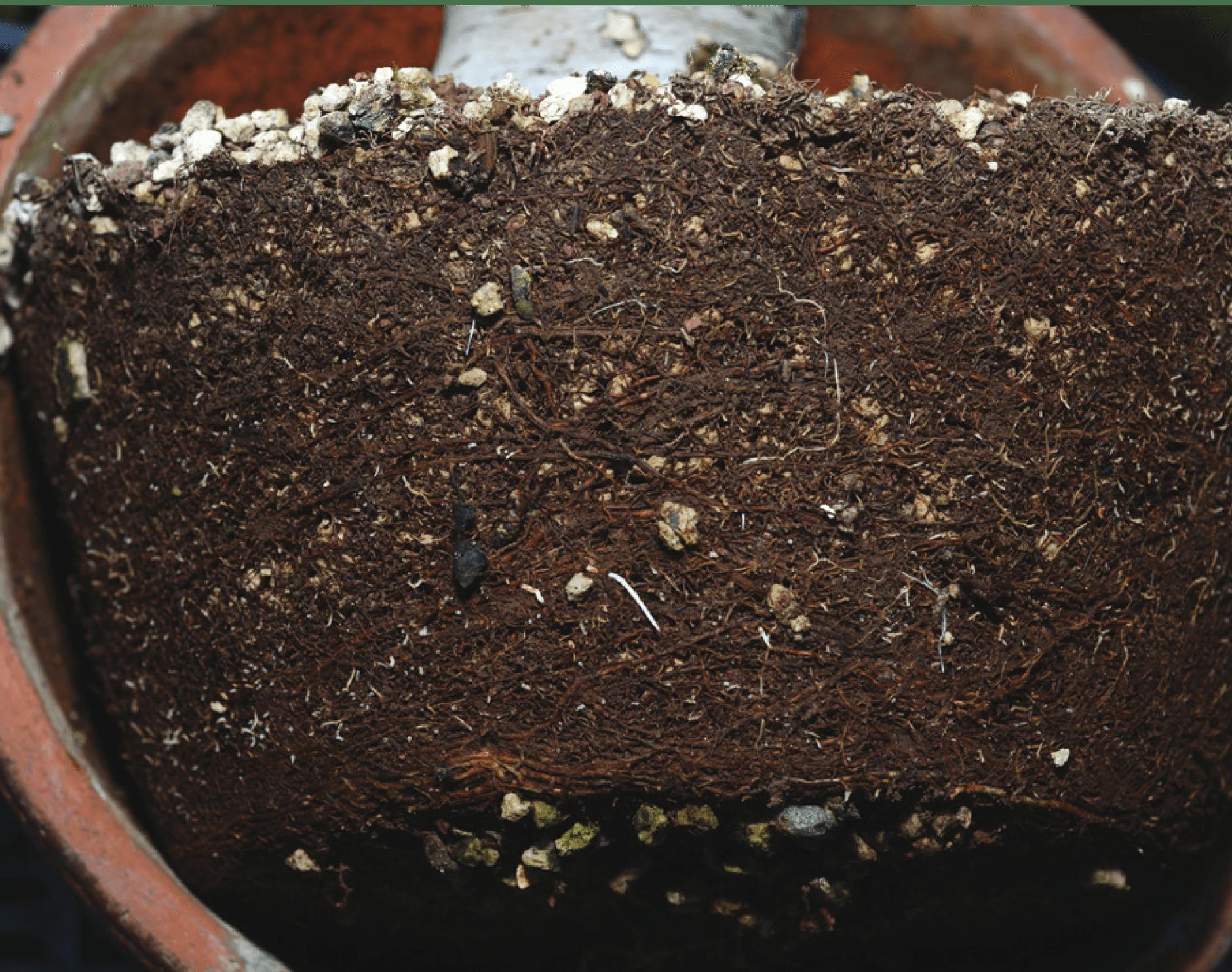 suelo que necesita trasplantar