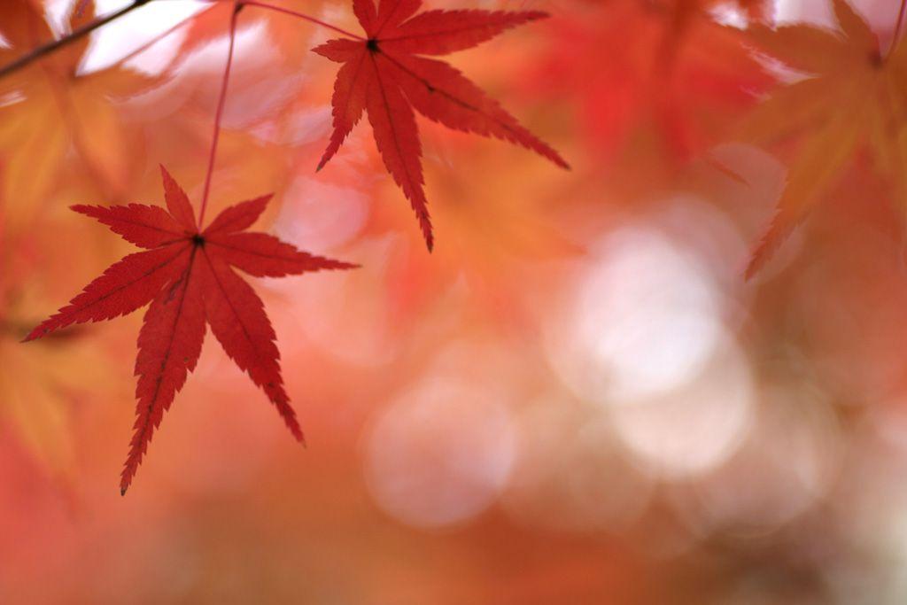 El otoño: estación mágica para los bonsáis
