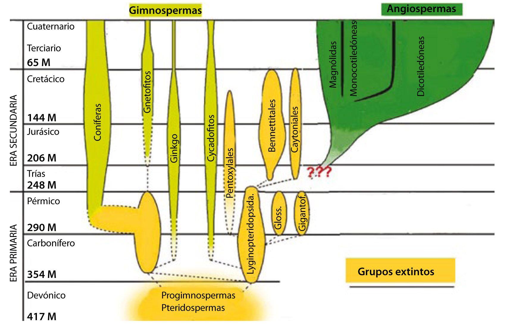 cronograma historia plantas
