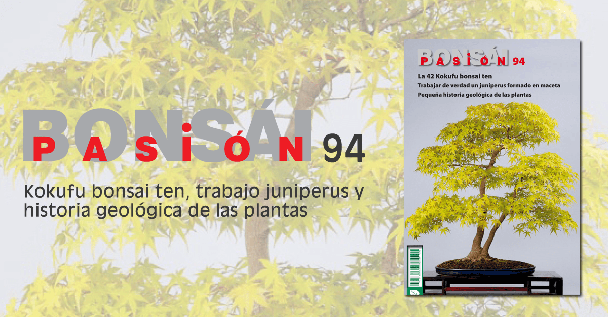 BONSAI PASION 94