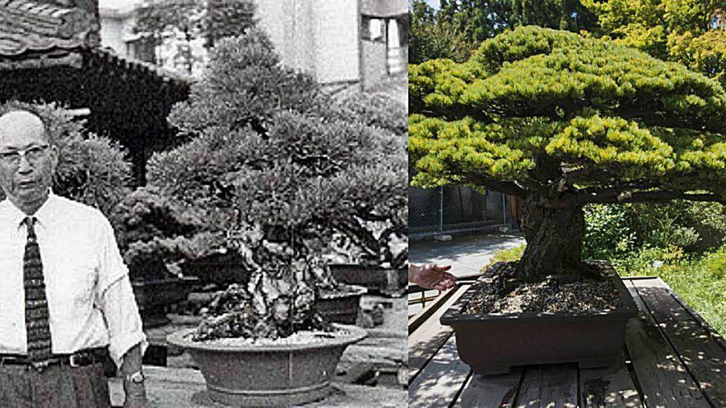 bonsai hiroshima