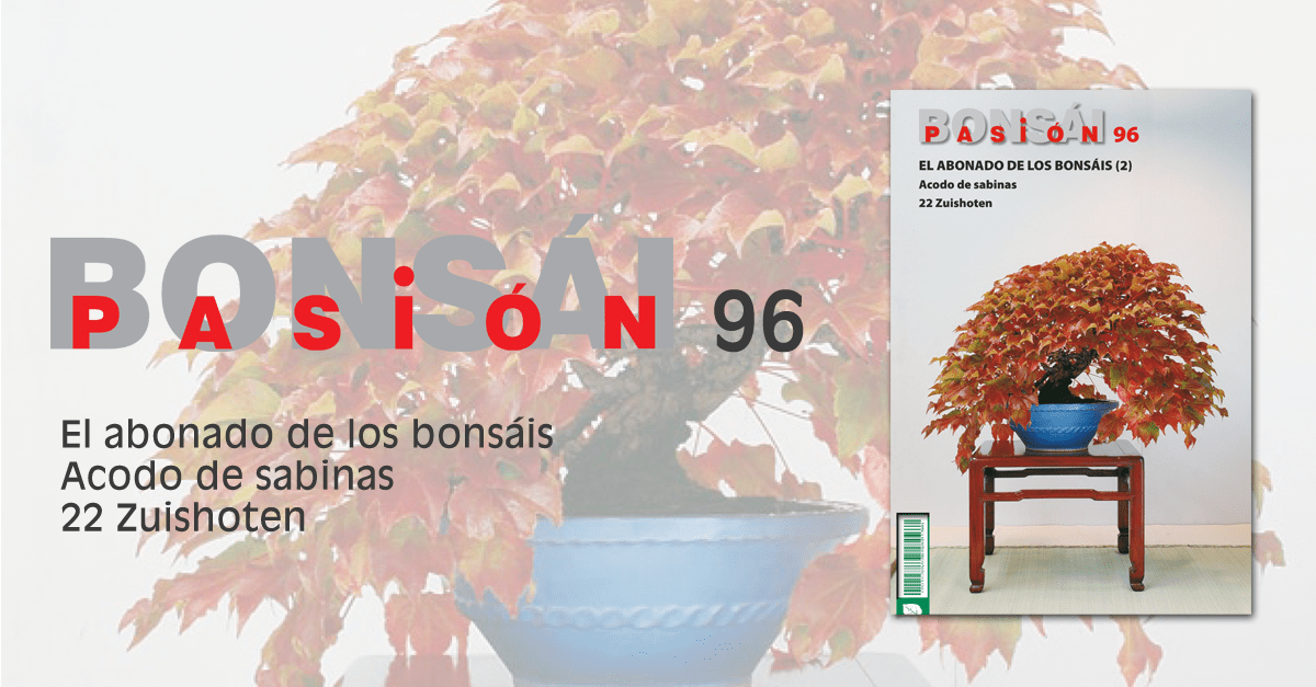 revista bonsai pasion 96 sabinas
