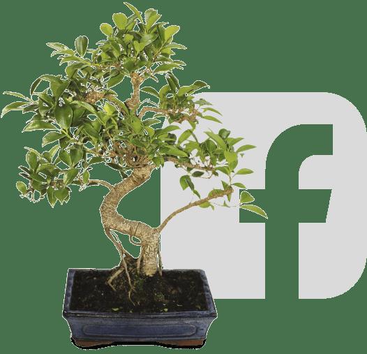 sorteig ficus facebook