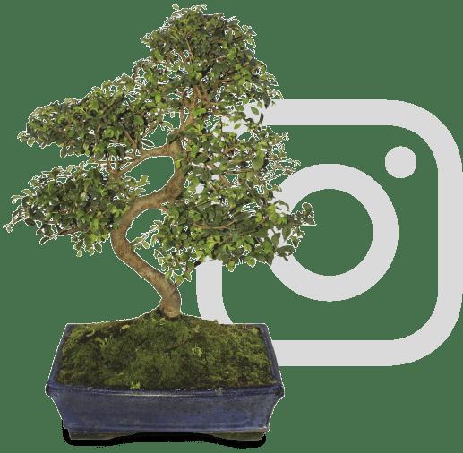 sorteig zelkova instagram