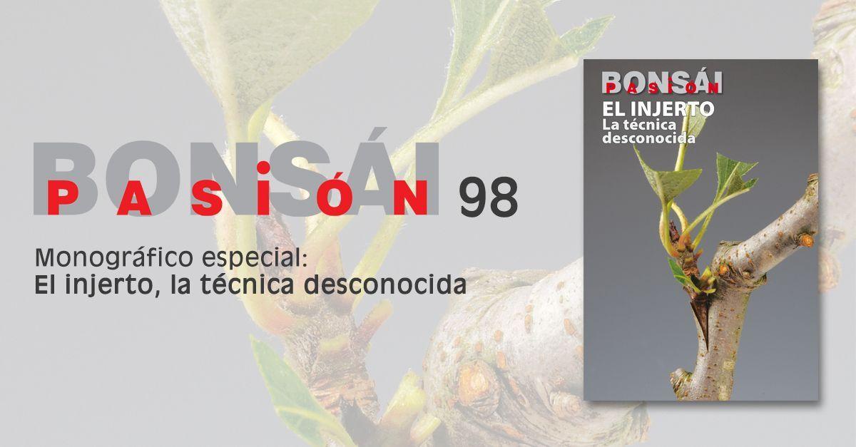 bonsai pasion 98 tipo de injerto