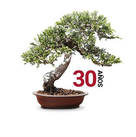 Jornada Asociaciones Mistral Bonsai 30 años