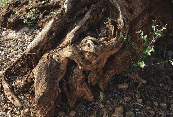 grosses racines