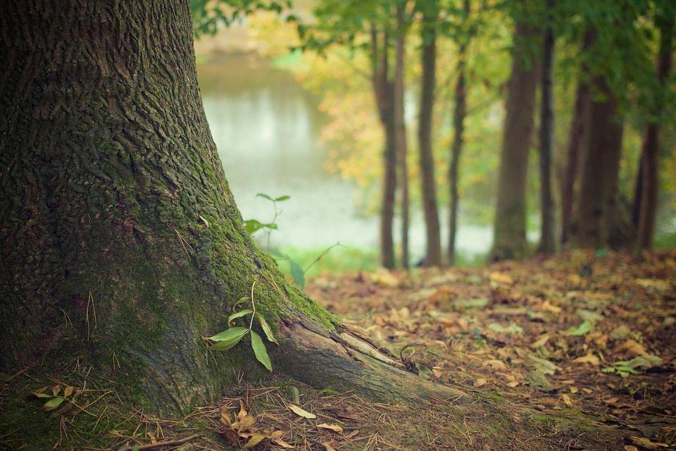 Las raíces de los bonsáis