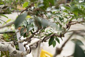 alambre bonsai
