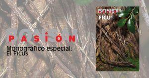 Bonsai Pasion Monografico Ficus Retusa