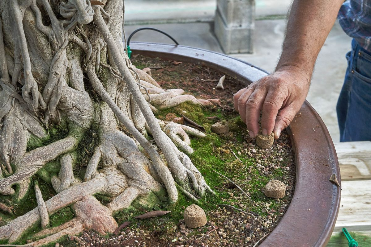 Abono orgánico para bonsái _ Mistral Bonsai
