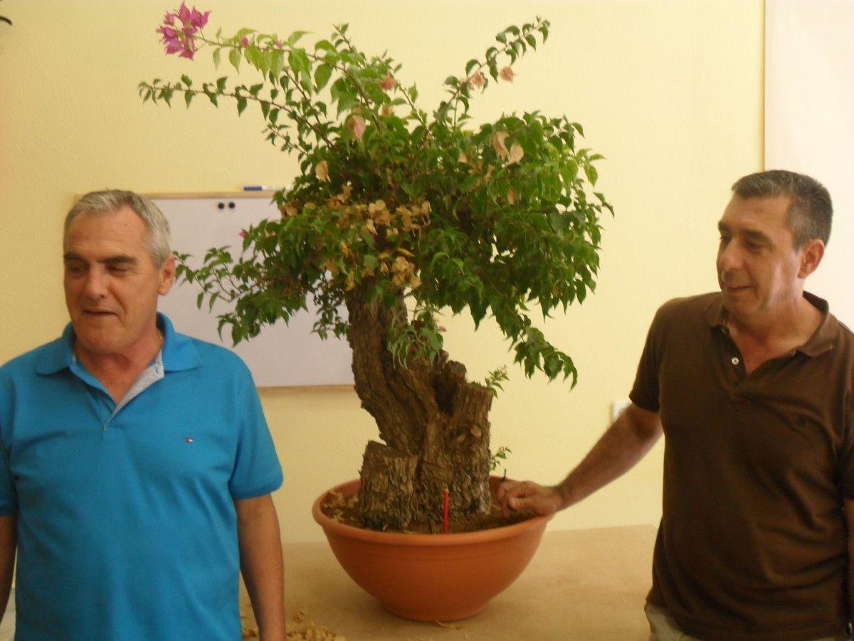 au studio de bonsaï de Miguel Ángel González