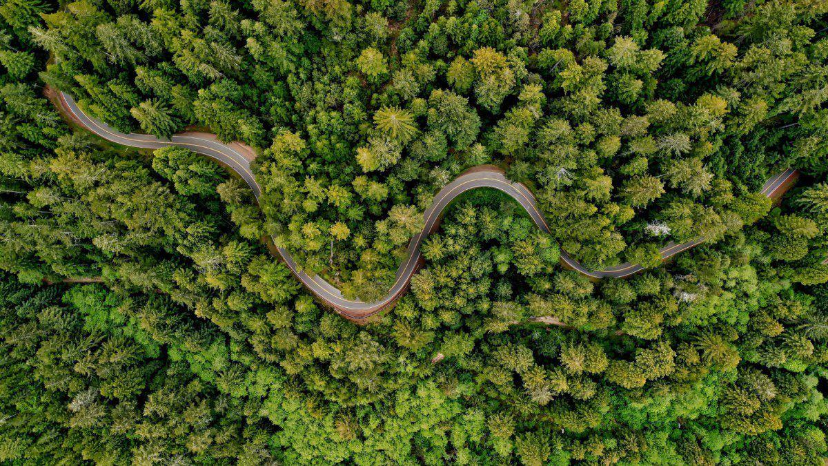 Une oasis de nature verdoyante