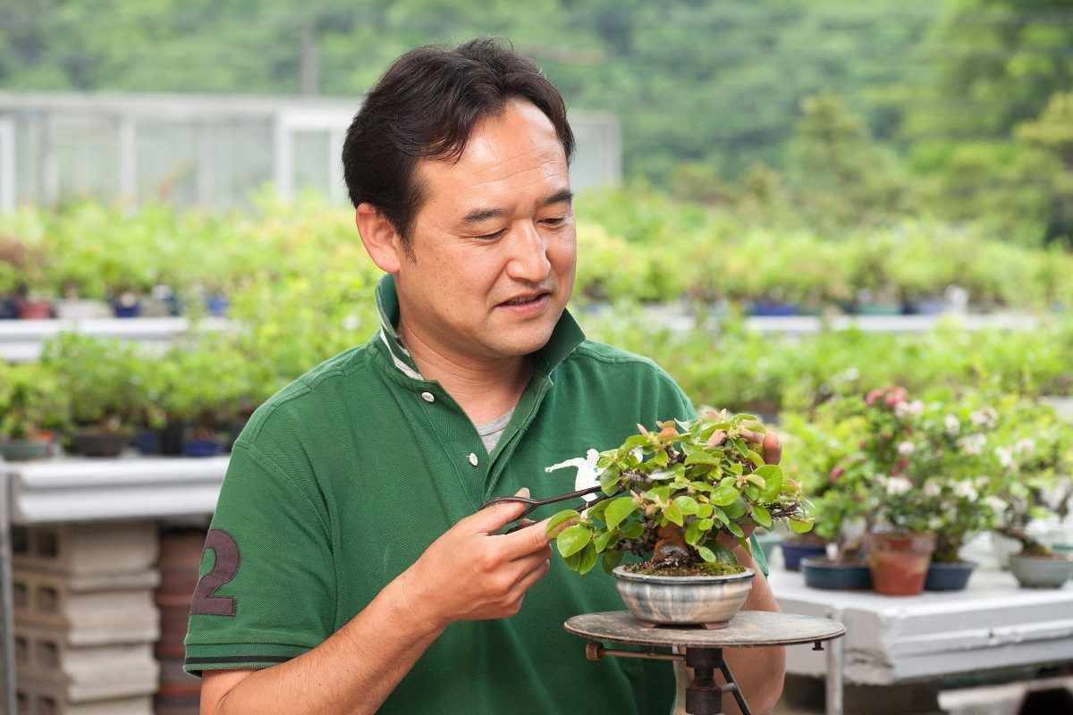 Hiroki Miura to be the guest Master at the next Bonsai Conference