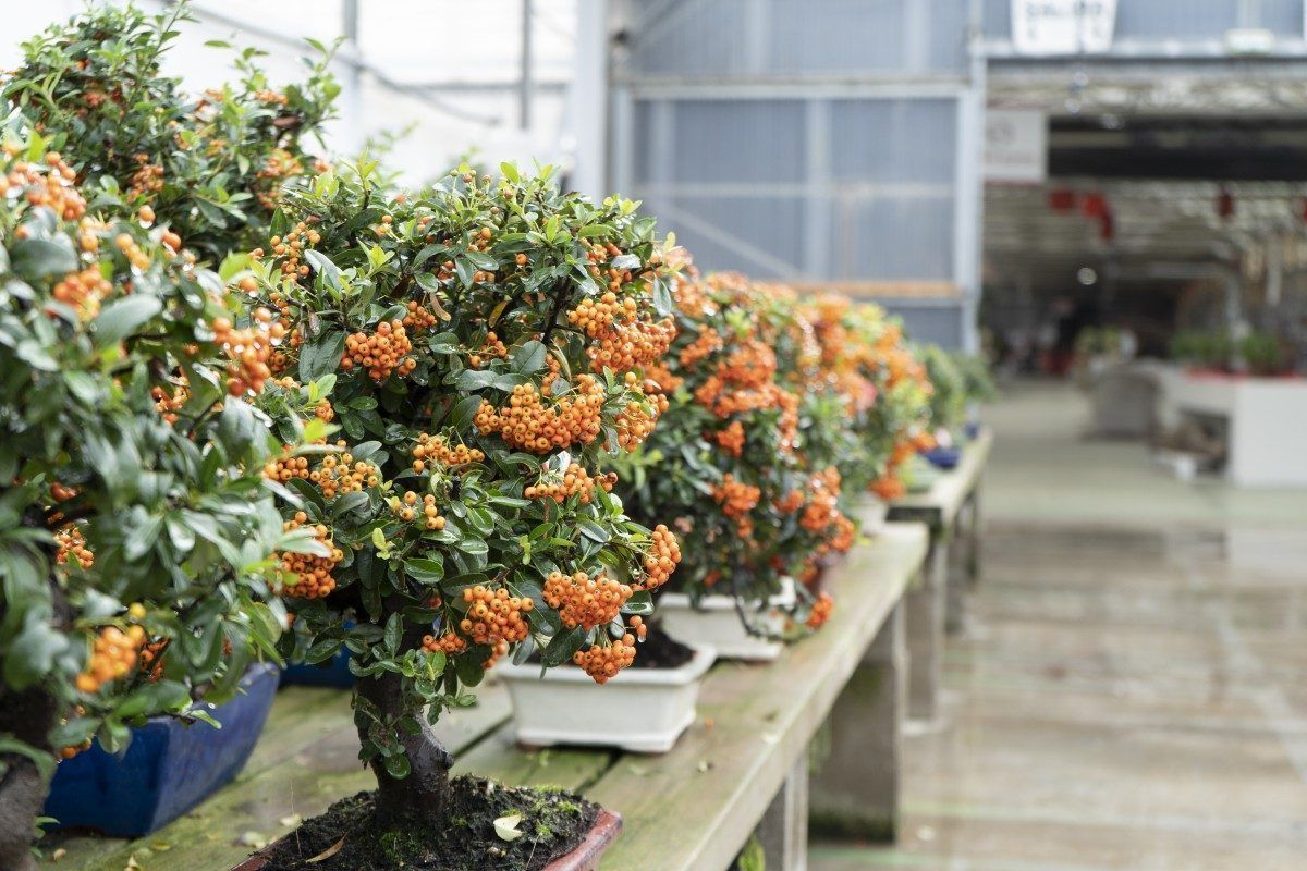 Is your bonsai ready for Autumn ?