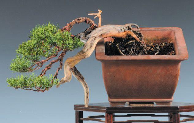 trabajo de madera muerta realizado por Tatsuya Terasawa