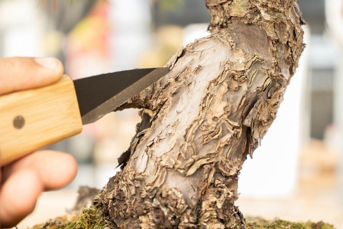 Le couteau à Jin