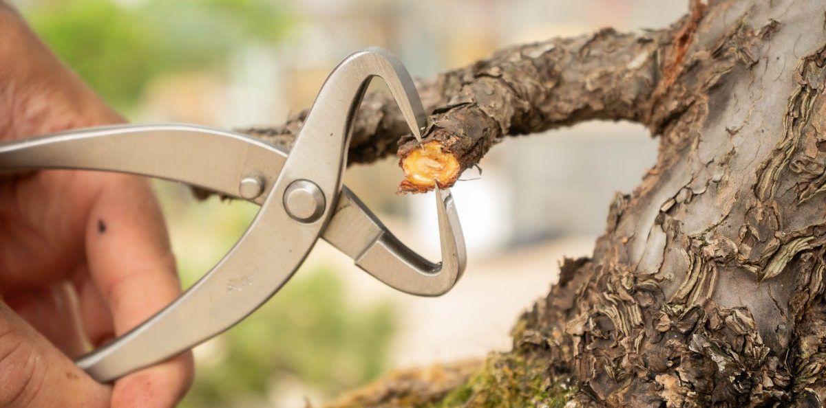 El split o tenazas para dividir tronco