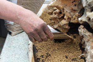 Les meilleurs substrats pour bonsaï
