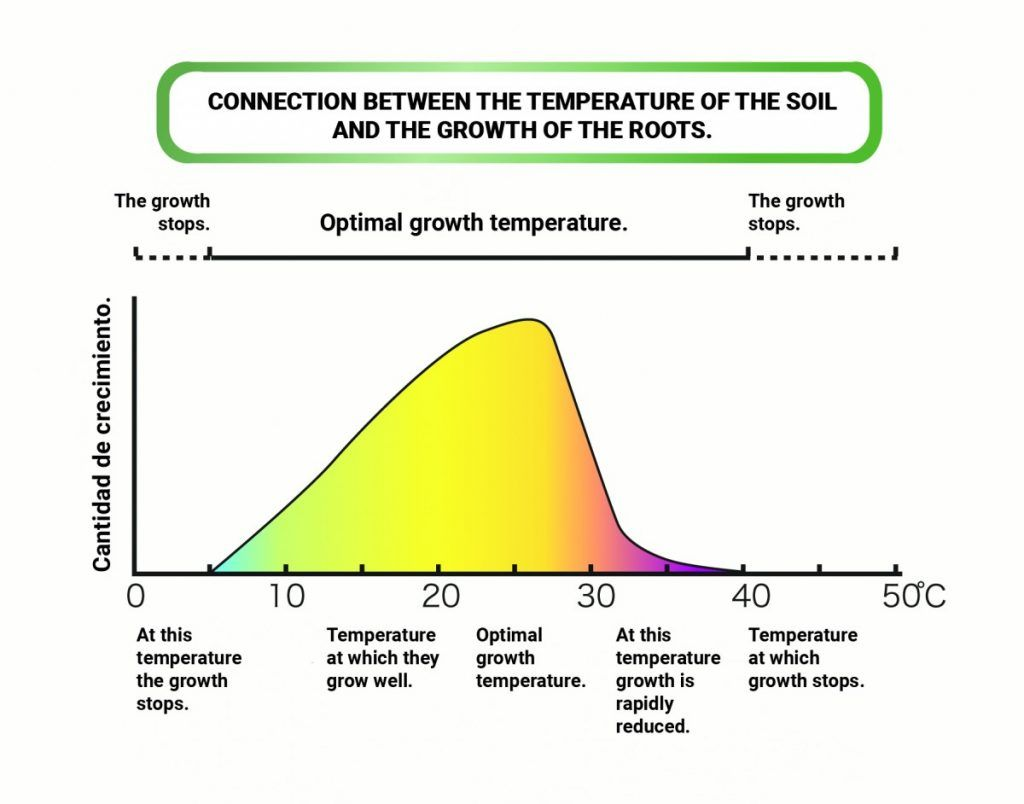 Connection between the temperature of the soil and the growth of the roots