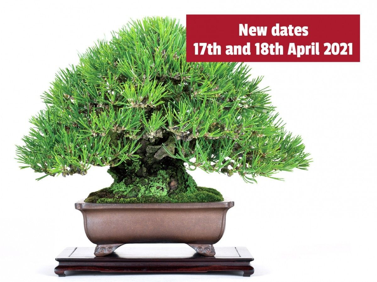 New dates for the Bonsai Days. Visit of the Master Hiroki Miura postponed to 2021.