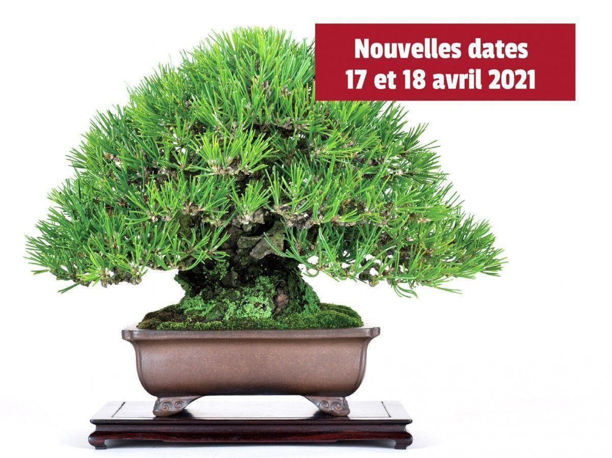 Nouvelles dates pour les Journées du Bonsaï. Visite du Maître Hiroki Miura reportée à 2021.