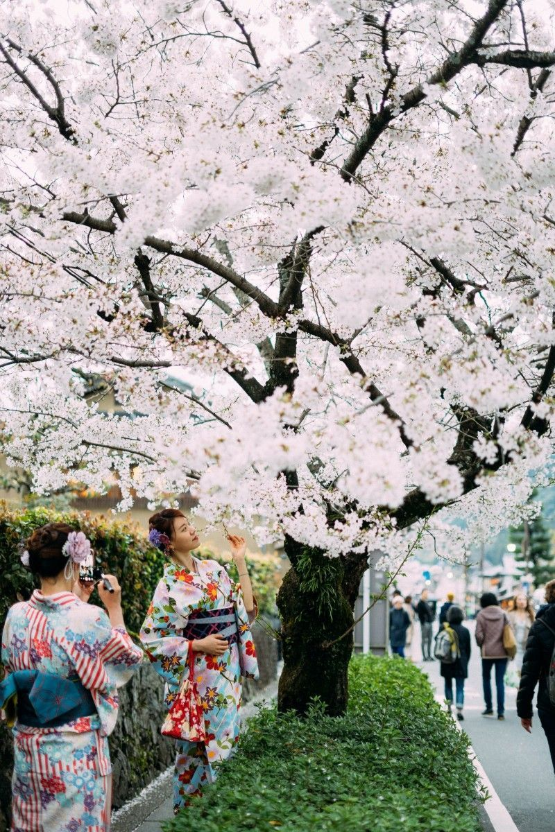 Hanami, the contemplation of cherry blossoms in times of confinement