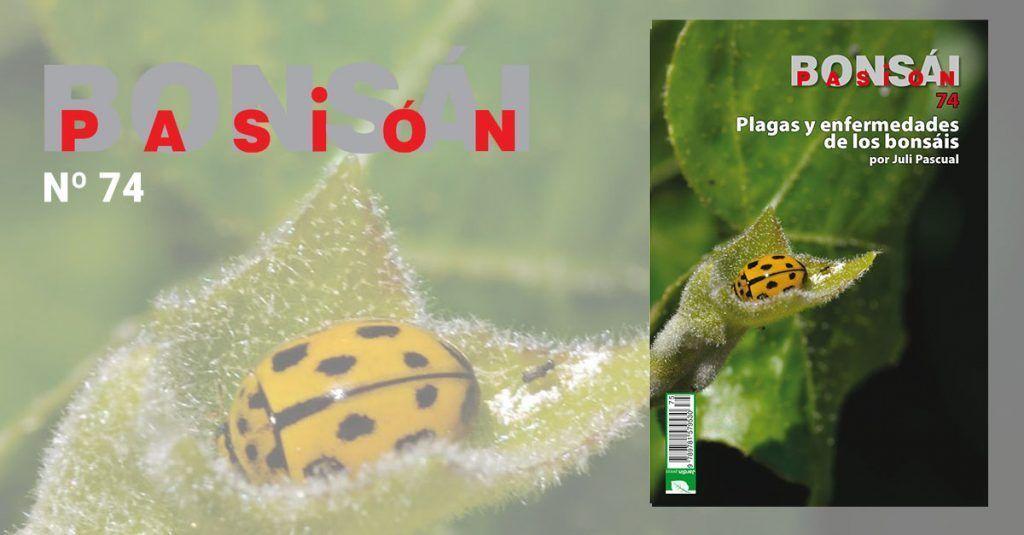 Monográfico Bonsai Pasion